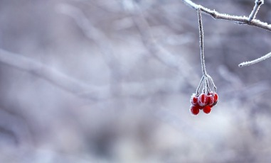 frozen-201495_1280